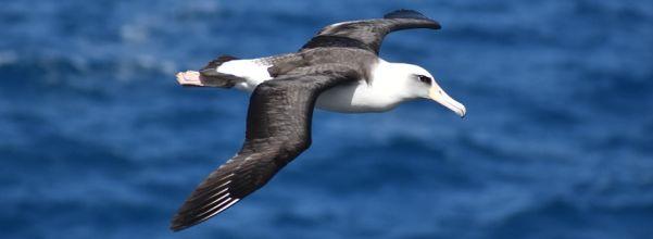 albatross golf